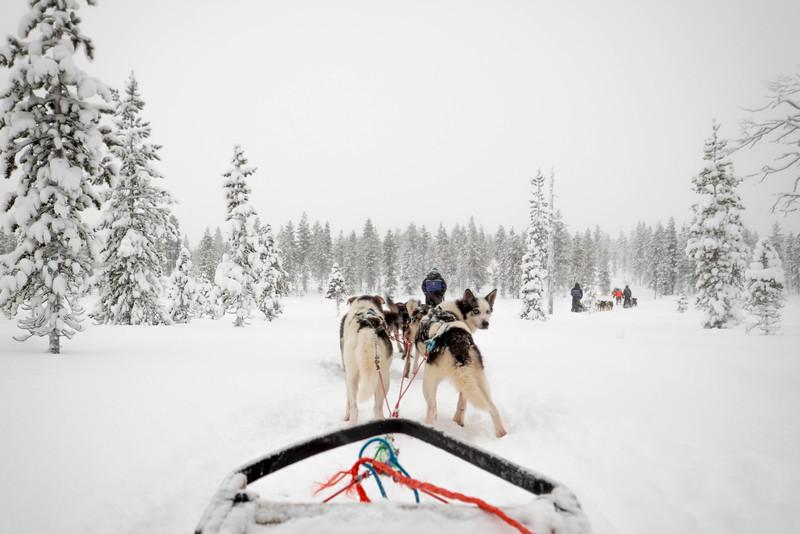 Finland_160116_39.jpg