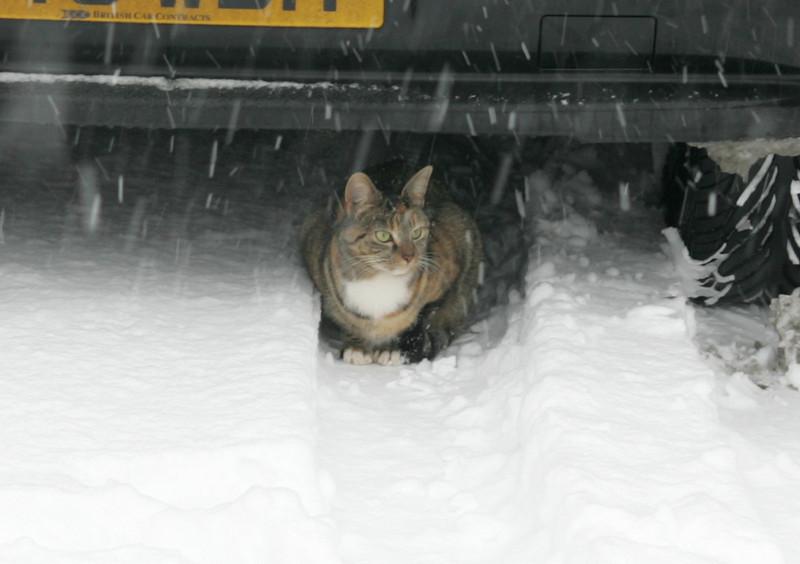 Snow 2010 083.jpg