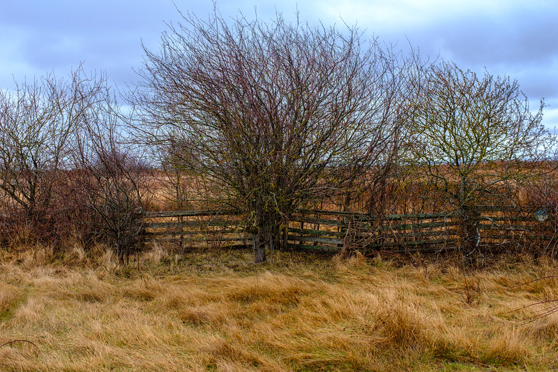 Bare Trees and Rail Fence
