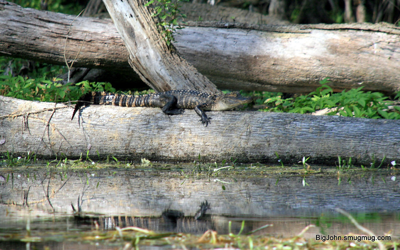 Silver River & Rainbow Springs state park Florida 3-30-12
