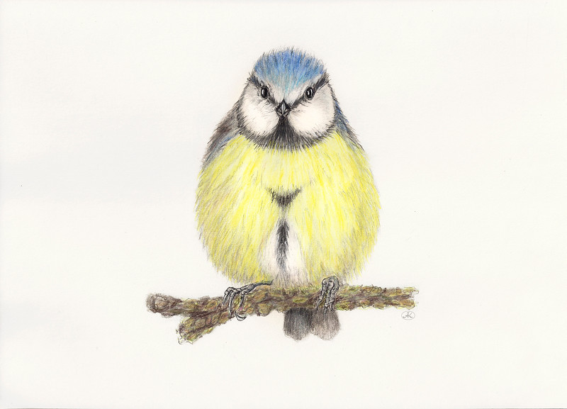 Bluetit_cleaned2.jpg