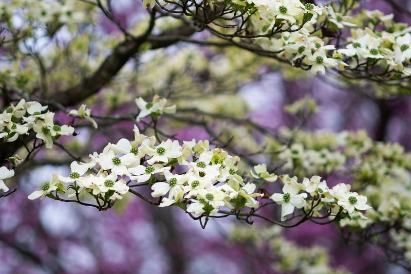 Flowers040919-25.jpg