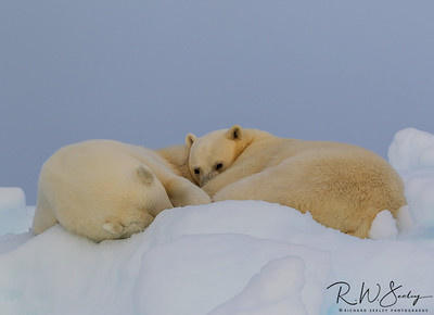 Svalbard Images