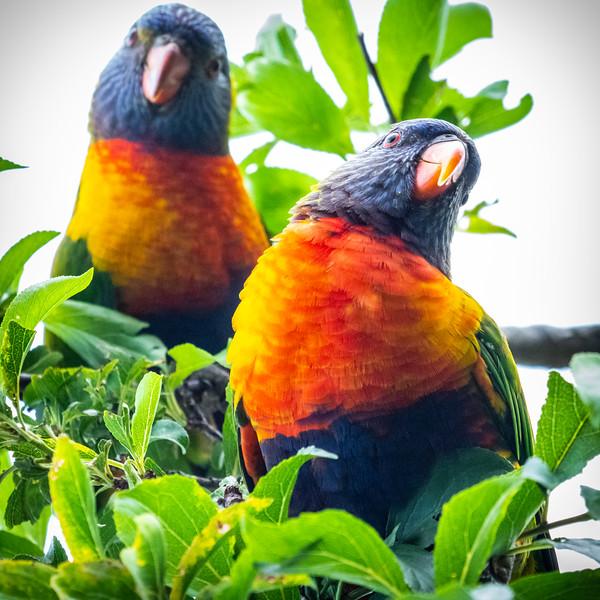 121818  birds  _5.JPG