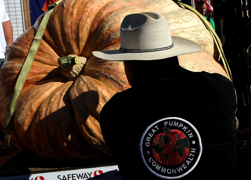 . Leonardo Urena moves his pumpkin onto a scale during the 40th Annual Safeway World Championship Pumpkin Weigh-Off on October 14, 2013 in Half Moon Bay, California.  (Photo by Justin Sullivan/Getty Images)
