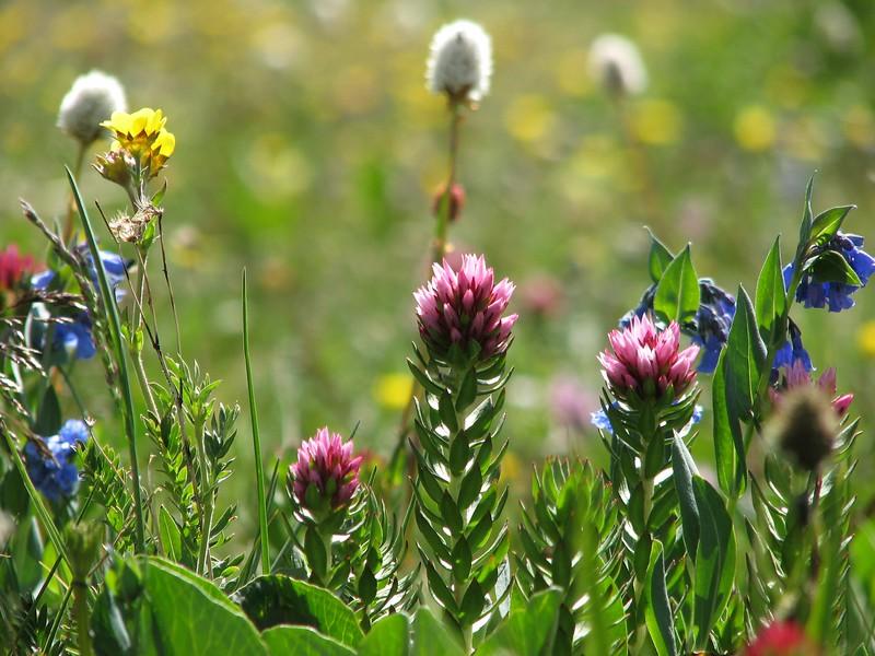amh FLOWERS (1400).jpg