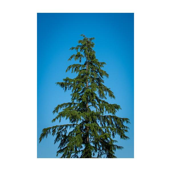 189_Tree_10x10.jpg