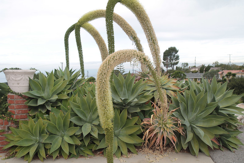Plants by the Posey Way entrance.
