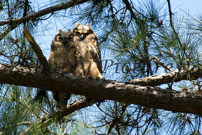Owl  122
