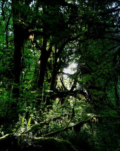 Light Through The Rainforest