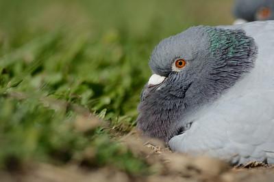 Birds AP 2013