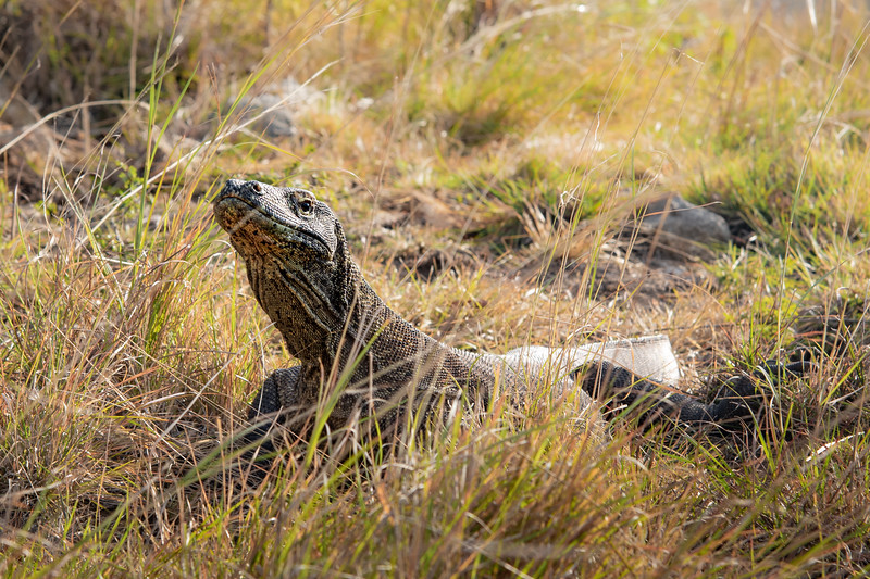 Komodo -June 29, 2019-_54A7923.jpg