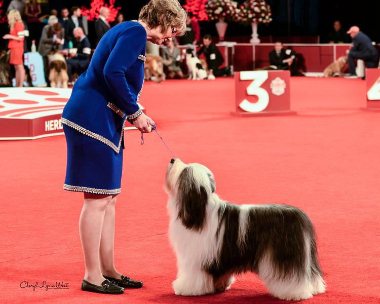 Polish Lowland Sheepdog - GCHB CH Stonebrook's Mischief Maker