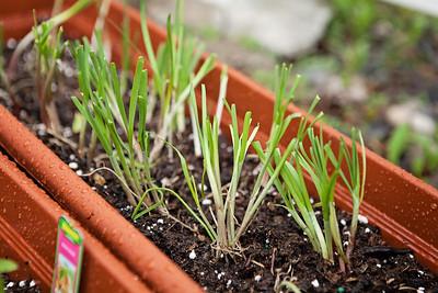Garden 05-06-15