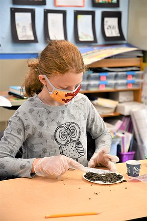 Dissecting Owl Pellets in Fourth Grade Science