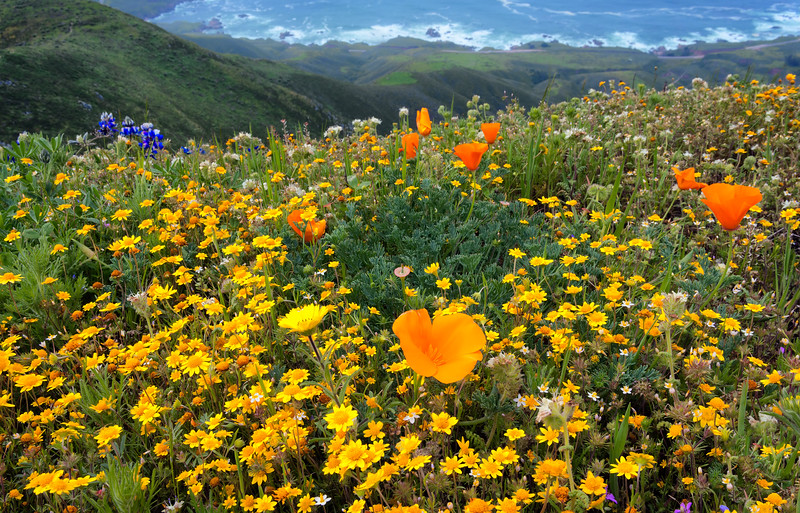 Spring Wildflowers, Garapatta State Park