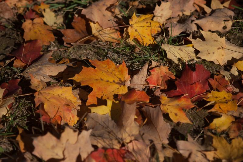 20121021-2012-10-2116-26-4013211.jpg