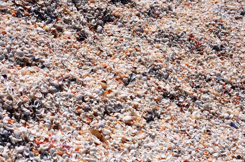 Mangrove Sea-Shell Hunting (Sanibel and Captiva Islands, Florida)