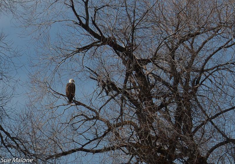 03-05-2020 Lower Klamath NWR-29.jpg