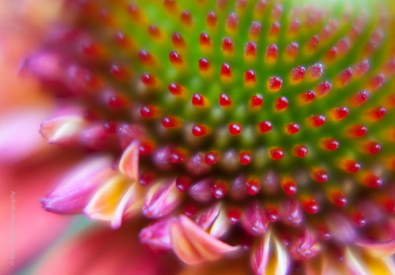 0715_Garden_Macro-48.jpg