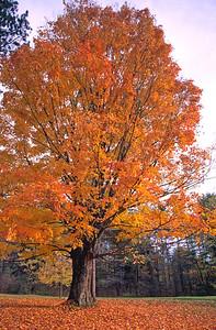 Allegany State Park New York