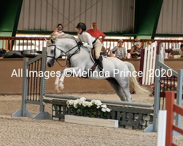 Royal Sport Horses Show II