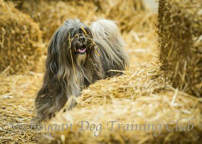 Barn Hunt 8/17/2014