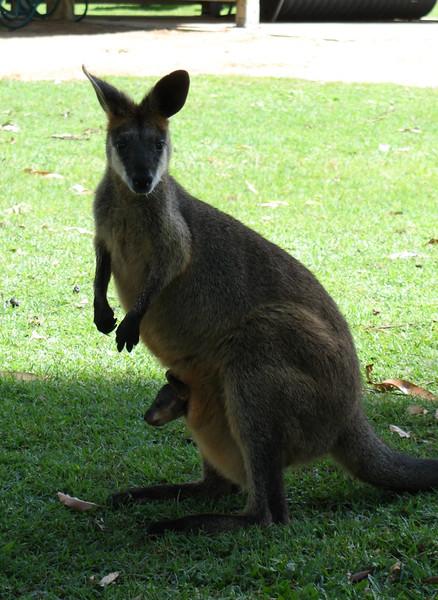 Australia 070.jpg
