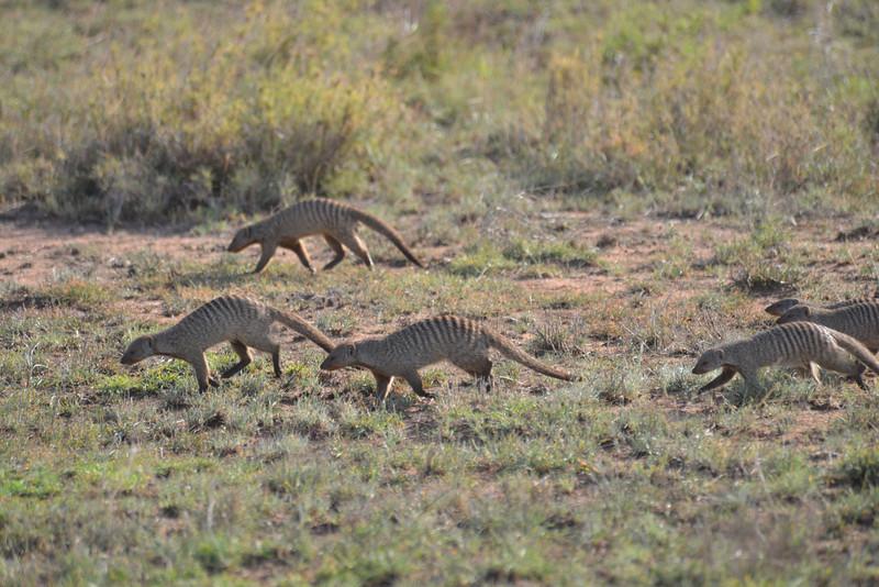 East Africa Safari 350.jpg