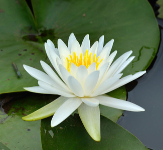 Hidden Treasures: The Lillies of Turtle Cove