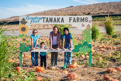 Tanaka Farms Pumpkin Patch:  October 8, 2016
