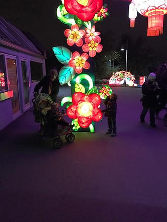 2016 Calgary Zoo Illuminations