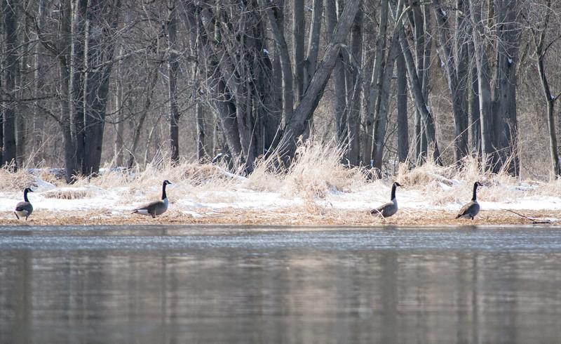 *2018-02-18 Wallkill River Kayaking in Winter-2018 02 18 (57 of 127)-005.jpg