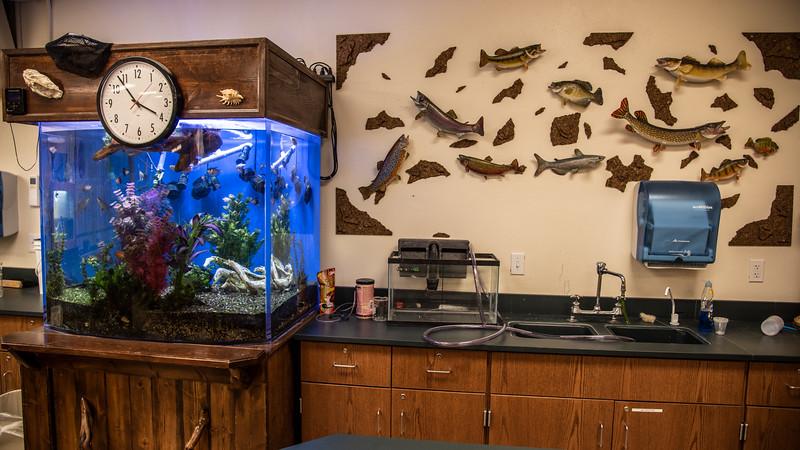 Classroom Fish.jpg