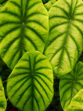 Leaves-1a-UE