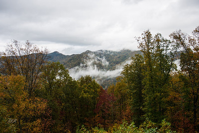 2012-10-15 Foliage fog below