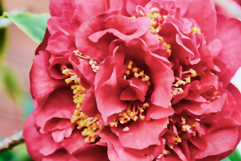 jan 9 - flower.jpg