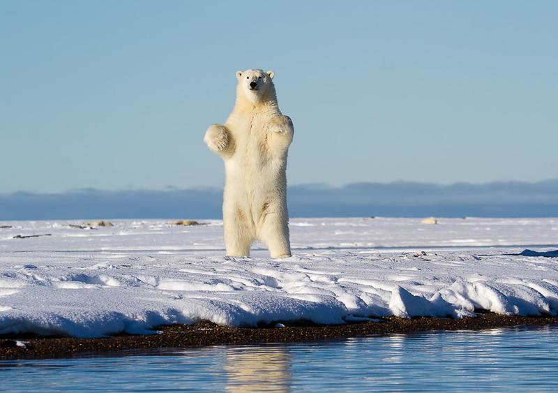 Tall Bear