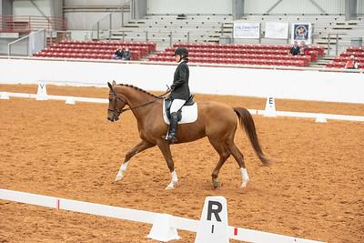 Horse 131