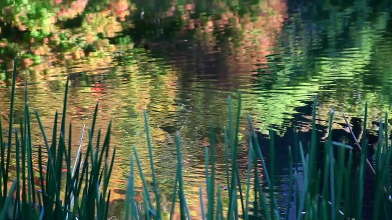 creek-090413-116.avi