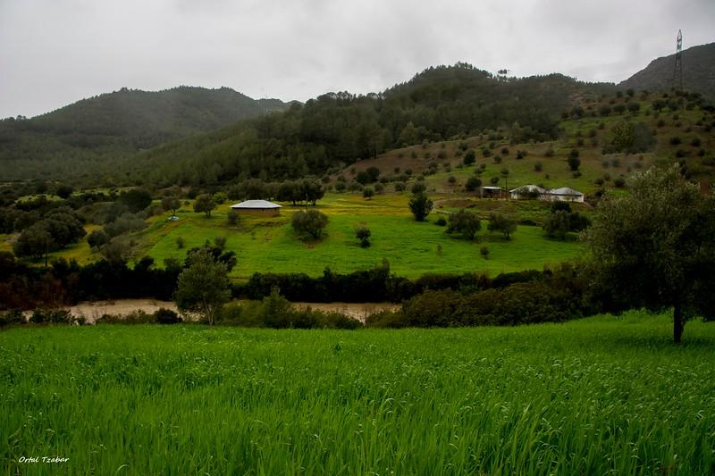 נוף ירוק 8.jpg
