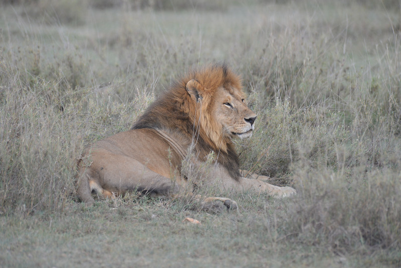 East Africa Safari 282.jpg