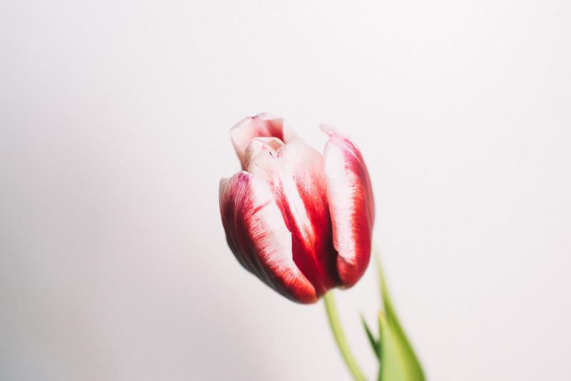 Meta Spring3.jpg