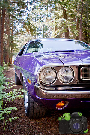 Purple Challenger