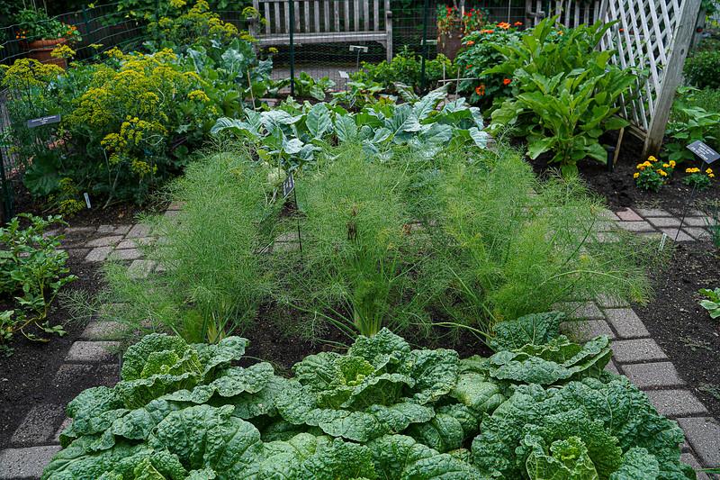 Arboretum, July Harvest-36.JPG