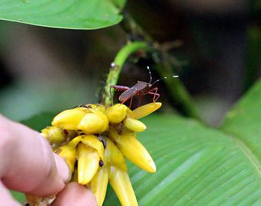 Stink Bug  (2)