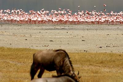 7-4-2008 Ngorongoro Crater Tanzania