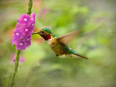 Hummingbird and Tropicals