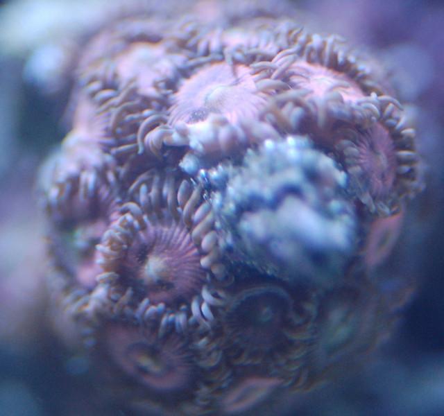 speckledpink.jpg