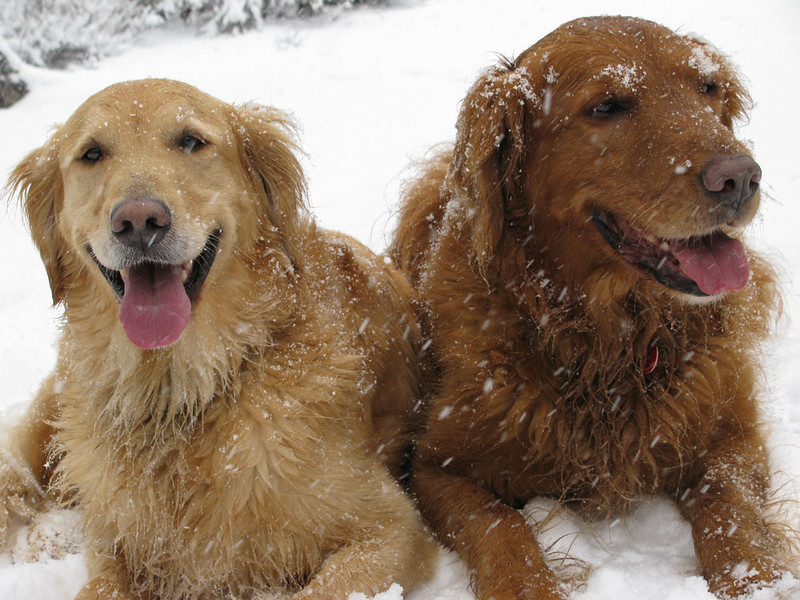 Roger and Homer in a central oregon snowstorm